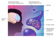 Biology of brain disorders