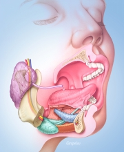 Anatomy of the mouth region