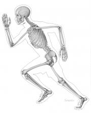 Skeleton in running man