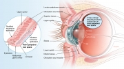 Use of retro-palpebral tear space with contact lens